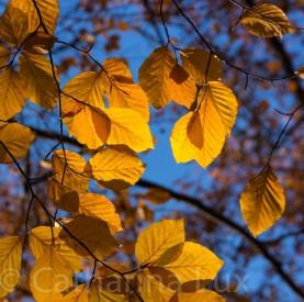 Herbst – Autumn – Fall